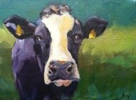 Purple Cow-2